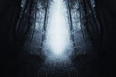 Surreal bosweg met blauwe mist royalty-vrije stock foto