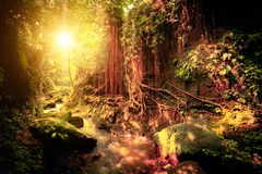 Surreal colors of fantasy tropical forest. Surreal colors of fantasy landscape at mystical tropical mossy forest with amazing jungle plants. Concept for royalty free stock photos