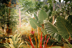 Surreal colors of fantasy tropical nature Royalty Free Stock Photography