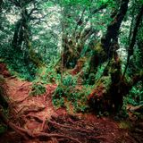 Surreal colors of gloomy tropical forest. Shrouded in mist and overgrown with shrubs and mossy trees. Frightening nature of somber rainforest. Mysterious nature Stock Image