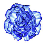 Surreal dark blue chrome сlove flower macro isolated Royalty Free Stock Image