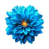 Surreal dark chrome clear blue dahlia macro isolated Royalty Free Stock Photography