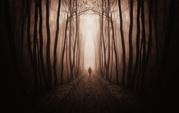 Surreal dark forest with man walking in fog stock image