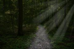 Surreal dark forest path, woods background. Surreal dark and mysterious forest or woods. A ray of light shines through the ground fog Royalty Free Stock Image