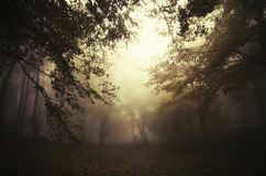Surreal dark scene in mysterious forest stock images