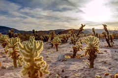 Surreal Desert Landscape Royalty Free Stock Photo
