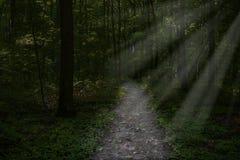 Surreal donkere bosweg, houtachtergrond royalty-vrije stock afbeelding