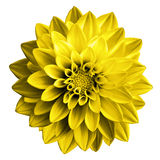 Surreal donkere de dahliamacro van de chroom gele bloem royalty-vrije stock afbeelding