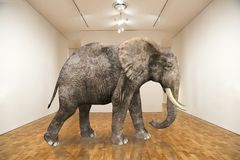 Surreal Elephant, Empty Room, Art Gallery Royalty Free Stock Image