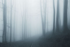 Surreal ethereal forest with fog Royalty Free Stock Photography
