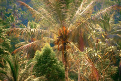 Surreal fantasy colors of tropical nature Royalty Free Stock Photo