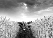 Surreal Field with woman Stock Photography