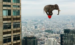 Surreal Flying Elephant, Office Building. A surreal flying elephant is floating through the air by an office building. Abstract concept for sales, marketing, and stock photo