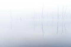 Surreal Foggy Morning at the Lake Stock Image