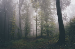 Surreal forest with fog in autumn Royalty Free Stock Images
