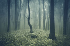 Surreal forest with fog Royalty Free Stock Photo