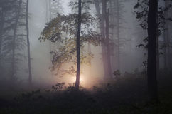 Surreal forest with fog and light shining from tree Stock Photo