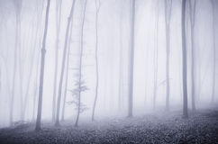 Surreal forest with fog Stock Photo