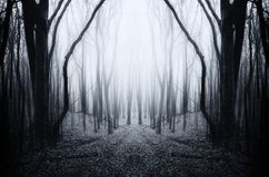 Surreal symmetrical forest with mysterious fog Royalty Free Stock Images