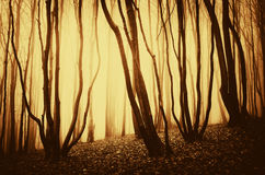 Surreal forest with fog at sunset Royalty Free Stock Images
