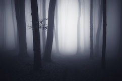 Surreal forest with fog trough trees at night Royalty Free Stock Photography