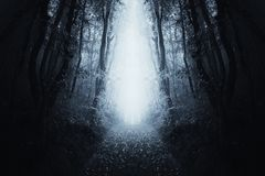 Surreal forest path with blue fog royalty free stock photo