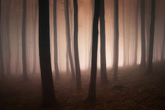 Surreal forest with red fog and light Royalty Free Stock Photos