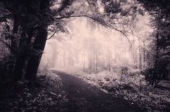 Surreal forest scene with infra red light and fog Stock Photos