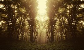 Surreal forest at sunrise Royalty Free Stock Images
