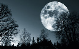 Surreal full moon, trees and forest Royalty Free Stock Images
