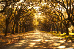 Surreal ghostly tree covered road. With Spanish Moss Royalty Free Stock Photos