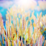 Surreal grass flower Stock Photography