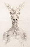 Surreal hand drawing of a deer decorative artwork Royalty Free Stock Photography