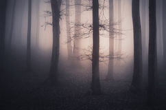 Surreal haunted forest Stock Images