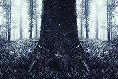 Symmetrical tree in surreal dark mysterious forest stock photography