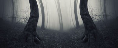 Surreal haunted symmetrical forest with fog Royalty Free Stock Images