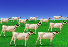 Surreal herd of white cows Stock Photography