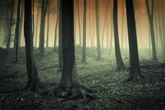 Surreal hout met griezelige mist royalty-vrije stock foto's