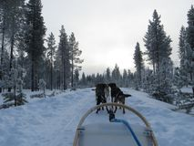 Surreal husky ride in the snow royalty free stock photos