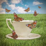 Surreal image - a cup of tea with a butterfly Royalty Free Stock Image