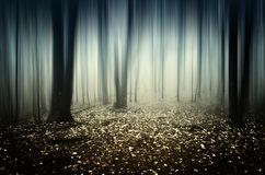 Surreal infinite forest Royalty Free Stock Image