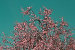 Surreal infrared pink tree. A surreal infrared pink tree in the sky Royalty Free Stock Photography