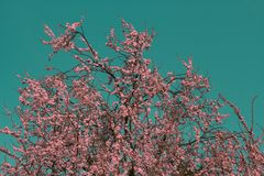 Surreal infrared pink tree. A surreal infrared pink tree in the sky Stock Image