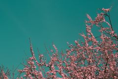 Surreal infrared pink tree. A surreal infrared pink tree in the sky Royalty Free Stock Photo