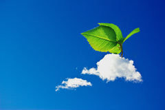 Surreal interpretation of green economy. Growth of leaves out of clouds, surreal image representing the growth of influence of the green economy and the concern Royalty Free Stock Photos