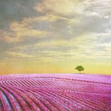 Surreal landscape with single tree Royalty Free Stock Photography
