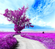Surreal landscape and tree. Surreal tree and dreamscape.Road through the fields Stock Photo