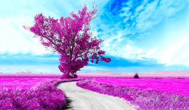 Surreal landscape and tree. Surreal tree and dreamscape.Road through the fields Stock Images
