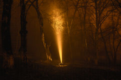 Surreal light in dark forest, Magic fantasy lightsin the fairy tale foggy forest Stock Photo
