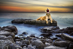 Surreal lioness. Surreal coastal scene with a lion resting on a rock surrounded by the sea Royalty Free Stock Photos